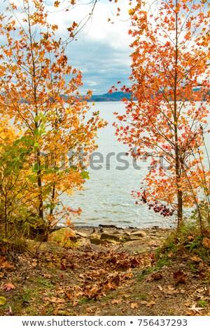 горные · озеро · кадр · деревья · вечер · солнечный · свет - Сток-фото © Steffus