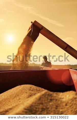 認識できない 男性 農家 大豆 フィールド 農業の ストックフォト © stevanovicigor