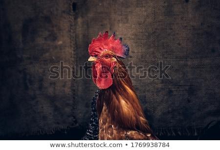 オンドリ 白 卵 背景 母親 グループ ストックフォト © bluering
