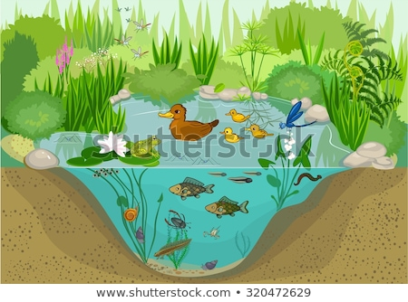 Teich Ökosystem Illustration Wasser Gras Landschaft Stock foto © bluering