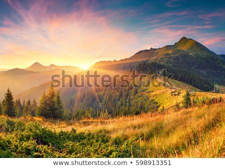 Belle sunrise paysage pittoresque collines lumière du soleil Photo stock © Taiga