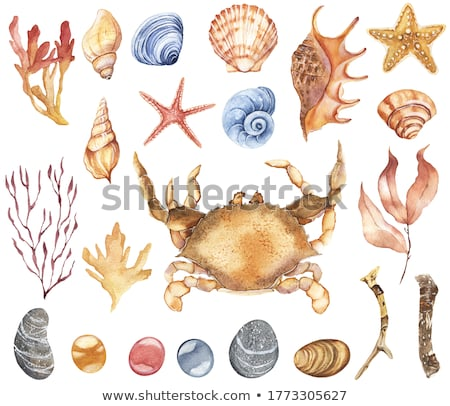 Kolorowy muszle ilustracja biały plaży ryb Zdjęcia stock © bluering