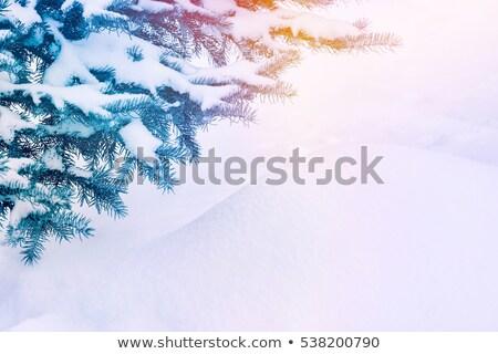 klassz · karácsony · tél · kerttervezés · fa · illusztráció - stock fotó © orensila