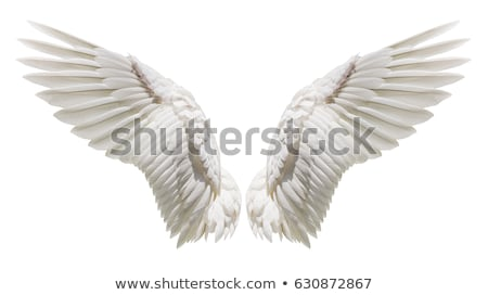 adelaar · illustratie · paar · engel · vleugels - stockfoto © krisdog