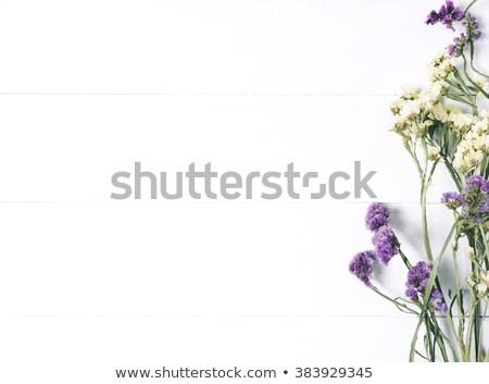 Vad virágok iskolatábla asztal virágok levél kert Stock fotó © almaje