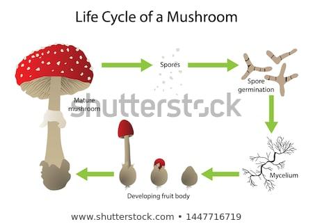 Fungi. Medical Concept. Stock photo © tashatuvango