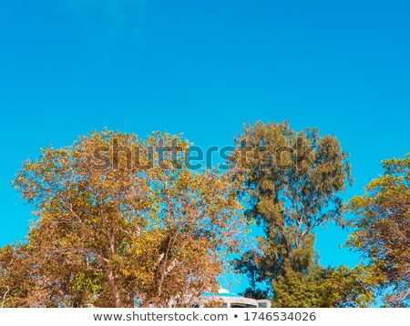 öreg tölgy ugatás nap fa zöld Stock fotó © pashabo