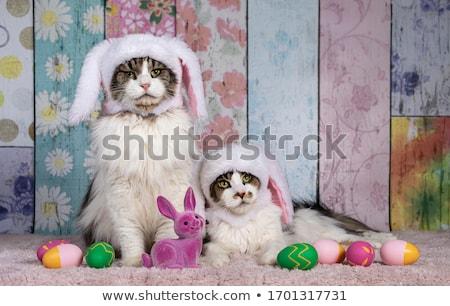 красивой Мэн кошки Hat имбирь Сток-фото © svetography