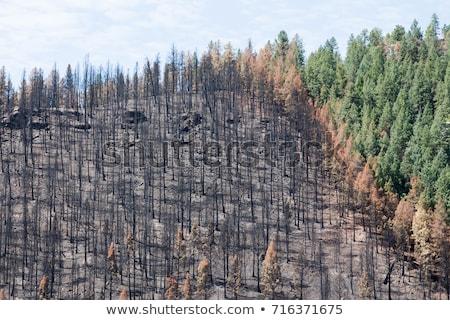 Incendios forestales Cartoon árboles casas fuego desierto Foto stock © blamb