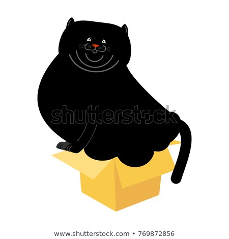 Fat Cat in small box isolated. Home pet in cardboard box. Vector Stock photo © popaukropa