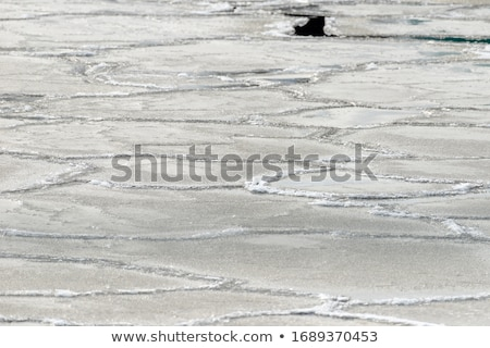 glace · surface · de · l'eau · lac · rive · eau - photo stock © Mps197