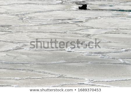 Gelo formas superfície da água lago costa água Foto stock © Mps197