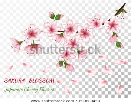 Stok fotoğraf: Blossom Cherry Peach Flowers Background Pattern