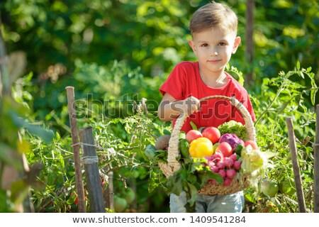 果物 住宅 気まぐれな 実例 コミュニティ ストックフォト © lenm