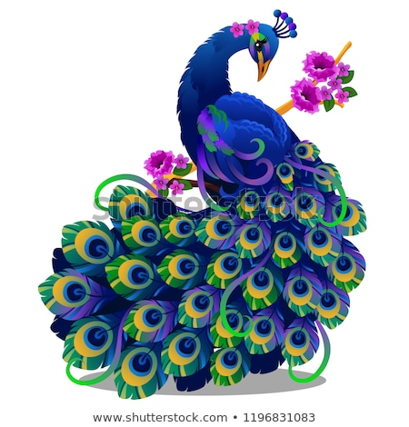 Beautiful bird peacock sitting on a perch with flowers isolated on white background. Vector cartoon  Stock photo © Lady-Luck