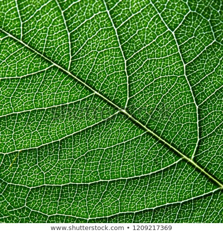 Macro foto hoja verde naturales patrón Foto stock © artjazz