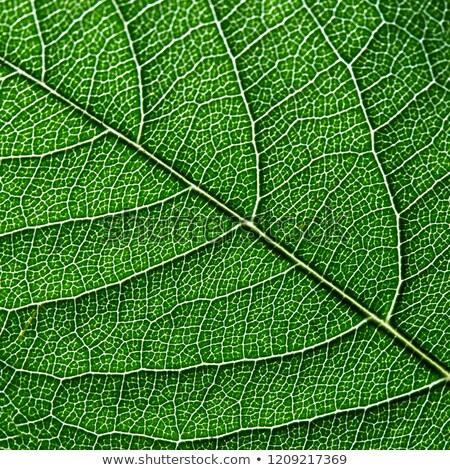 Macro foto folha verde naturalismo padrão Foto stock © artjazz