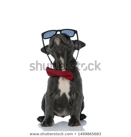 Curioso elegante óculos de sol para cima americano Foto stock © feedough