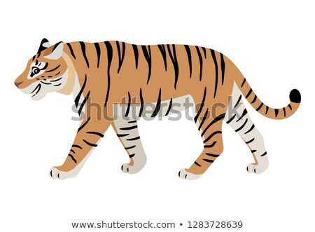 Friendly predatory animal, cute walking tiger icon Stock photo © MarySan