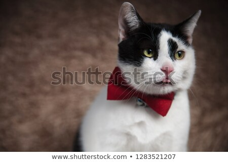head of gentleman metis cat looking down to side Stock photo © feedough