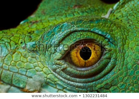 緑 · 龍 · トカゲ · 野生動物 - ストックフォト © lopolo
