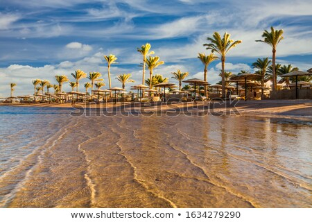tropical beach with palm tree and sunbeds Stock photo © dolgachov