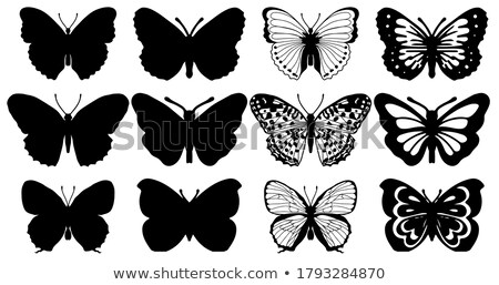Collection of butterflies stamps. Stock photo © FER737NG