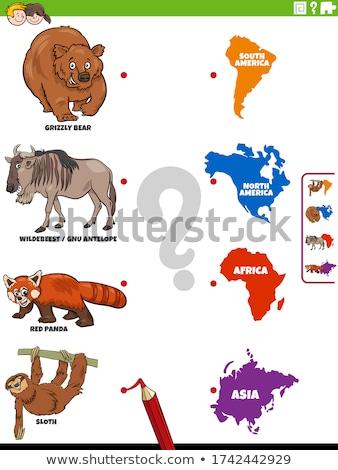 Gyufa állatok kontinensek oktatási feladat gyerekek Stock fotó © izakowski