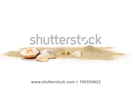 Orange background with starfish and shell Stock photo © bluering