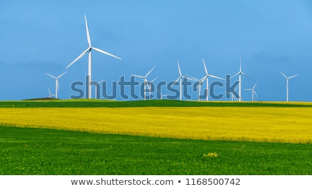 Flowering rapeseed with wind turbines Stock photo © elxeneize