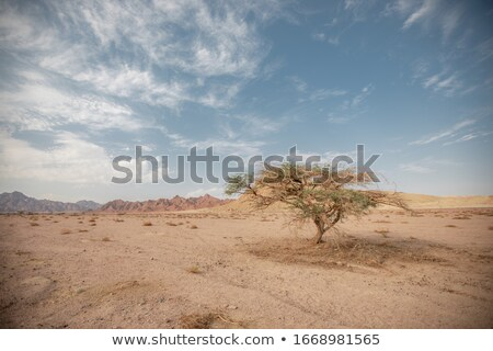 One tree in a dry sandy empty amid hills and clouds Stock photo © ElenaBatkova