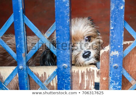 Cute little puppy behide the fence Stock photo © Ansonstock