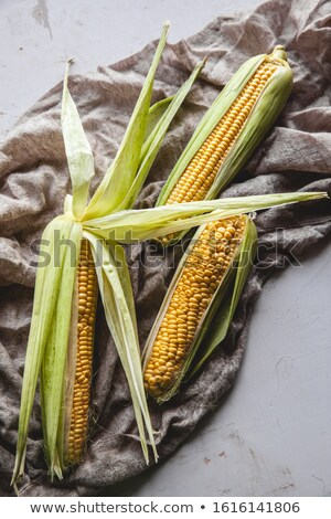 cevada · campo · textura · verão - foto stock © luiscar