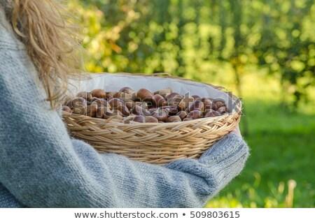 Fiatal nő gyűlés gyümölcs élet ősz női Stock fotó © photography33