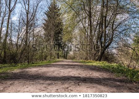 Sáros út kép koszos fű fa Stock fotó © magann