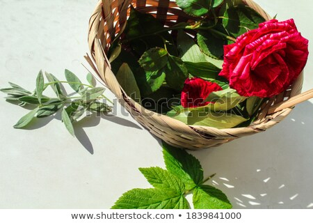 One light-pink rose in basket Stock photo © boroda