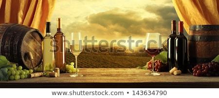 vörösbor · szőlő · növekvő · öreg · szőlőtőke · közelkép - stock fotó © justinb