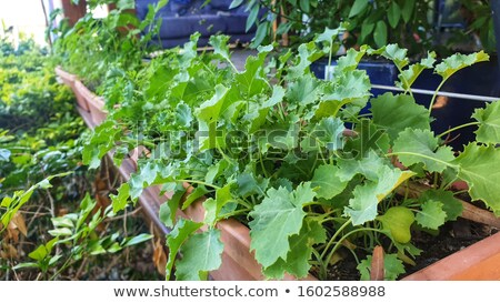 vegies in the garden stock photo © clearviewstock
