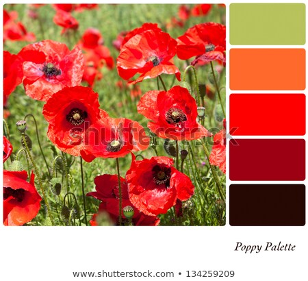 Red poppy colour palette swatch Stock photo © REDPIXEL