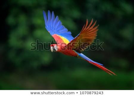 mavi · sarı · Namibya · Afrika · kuş · hayvan - stok fotoğraf © chris2766