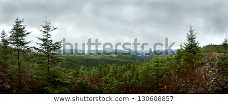 Deap forest Panorama - Reforestation  Stock photo © aetb