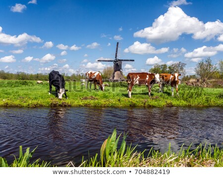 Windmill in a sunny Dutch landscape Stock photo © Hofmeester