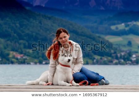 ハスキー 家族 白 犬 グループ オオカミ ストックフォト © silense