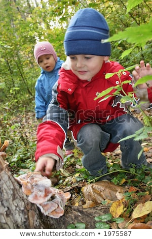 children explore shelf fungus Stock photo © Paha_L