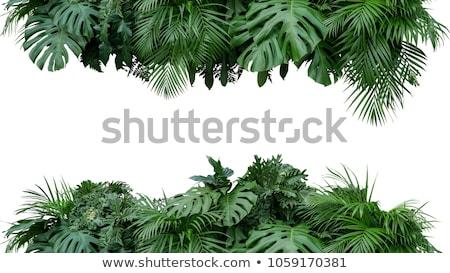 熱帯雨林 木材 風景 雨 工場 ストックフォト © Juhku