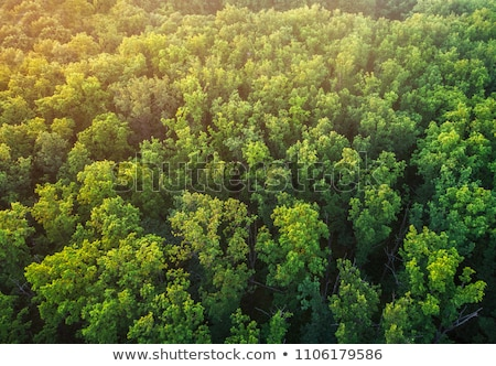 sunset in beautiful oak forest with bright plants Stock photo © meinzahn