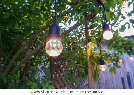 Glühend Glühbirne Obst Zweig isoliert weiß Stock foto © gavran333