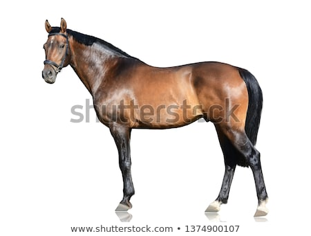 Постоянный лошади грязные области лет время Сток-фото © castenoid