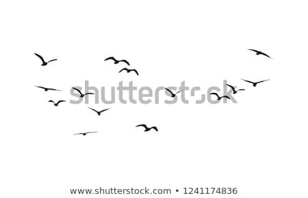 Photo stock: Oiseaux · illustration · branche · silhouette · carte · blanche