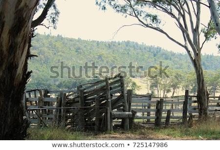 Old cattle on wood fire Stock photo © ivonnewierink